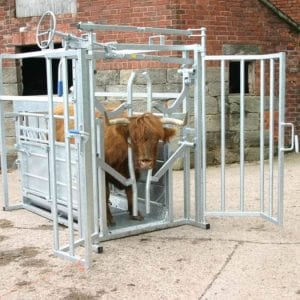 Highland cattle crush
